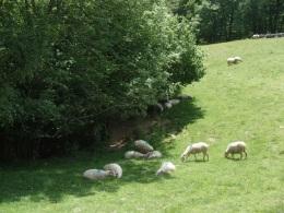 Agroforesty blog 1