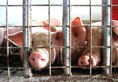 Image result for ecowatch How Factory Farming Contributes to Global Warming